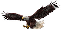 Lakota Eagle Native Ameican